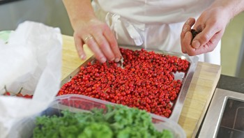 Matlaging med rognebær
