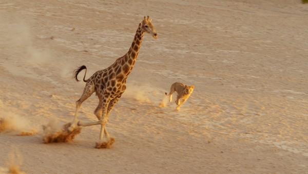 Ekstrem natur krever ekstreme dyr