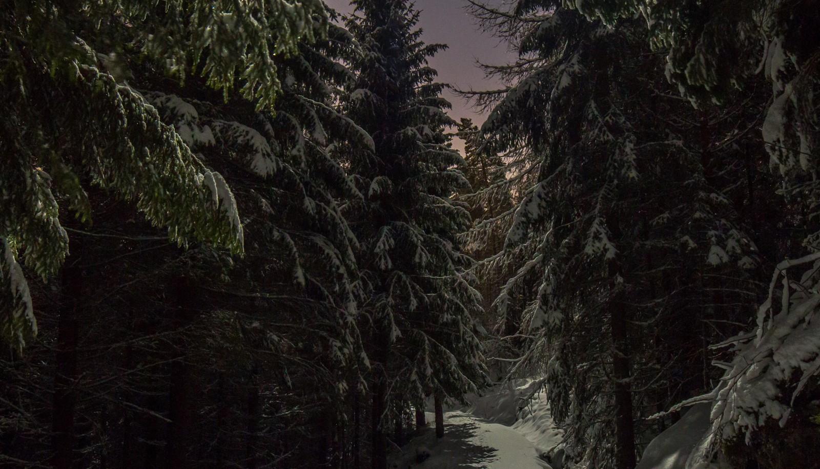 Måneskinnskveld i Elsterparken