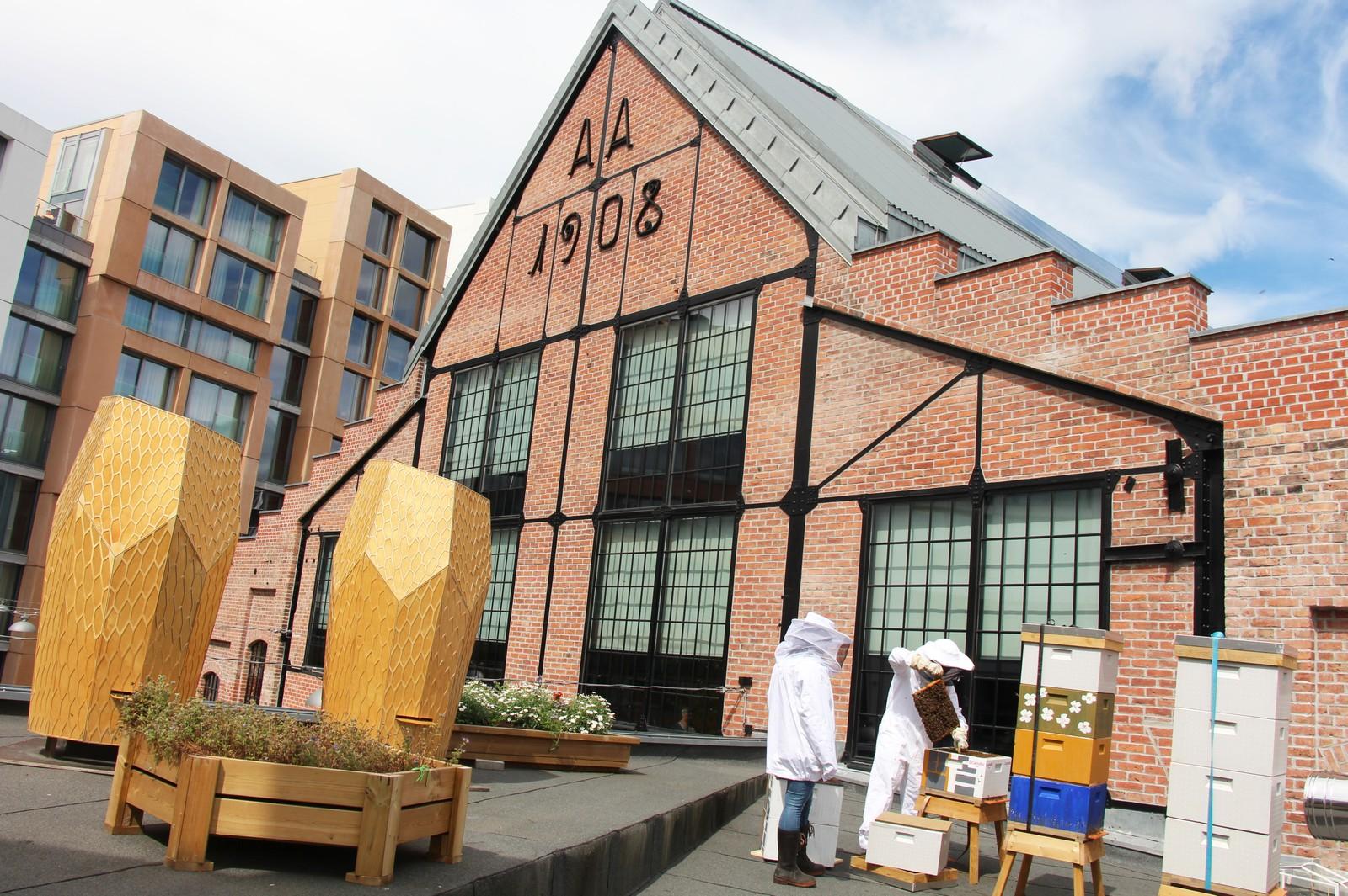 – Jeg ønsket å drive med bier i nærheten av der jeg bodde. Jeg bor rett ved Mathallen i Oslo og da ble det naturlig at jeg hadde kubene på taket her, sier Alexander Du Rietz. Her har han tatt ned kubene fra taket for å vise dem frem til oss.