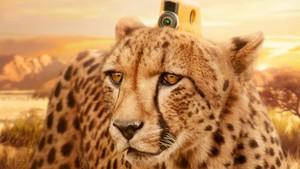 Dyr med kamera