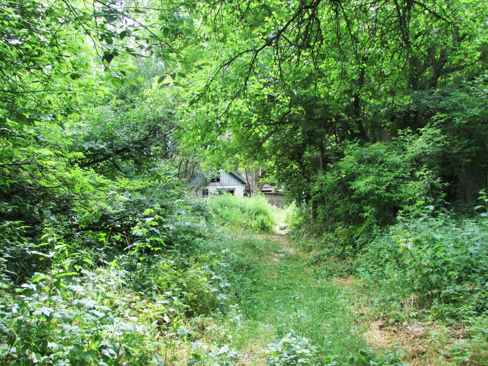 Mellom trærne i Zalissia ser man noen av de overvokste boligene der rundt 3000 mennesker hadde sine hjem