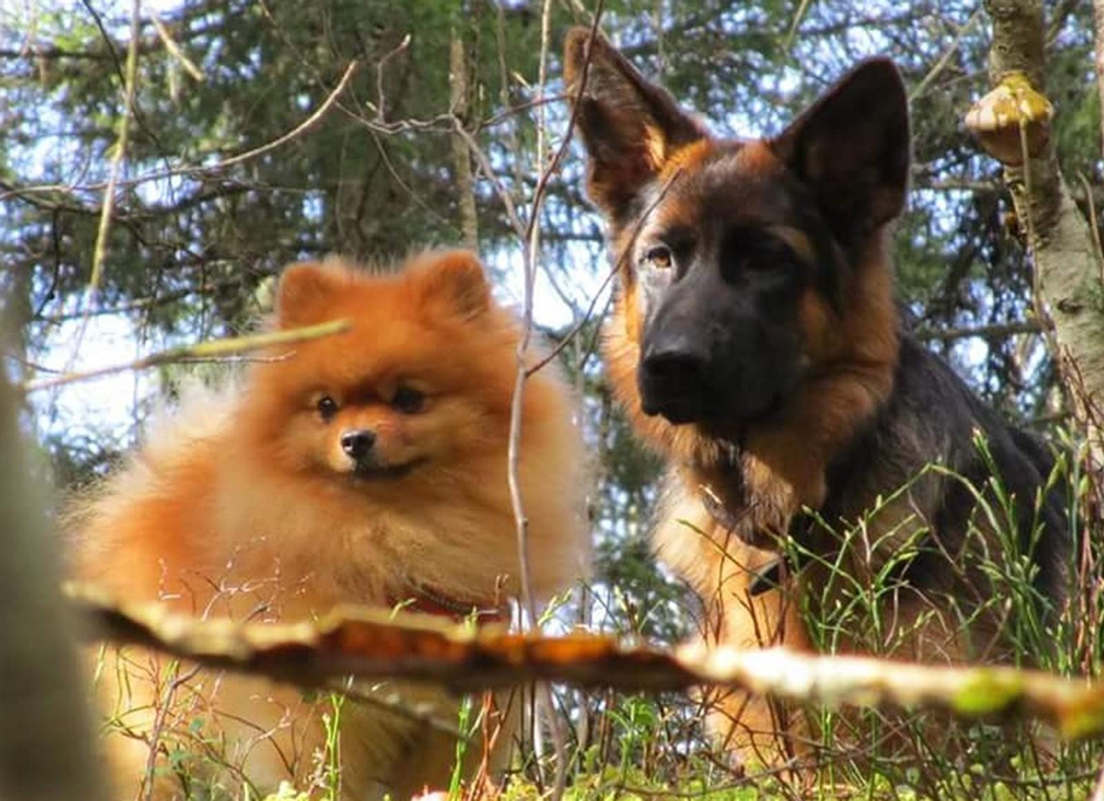 To gode venner på skogstur i Åsenfjord