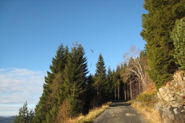 På veg opp til Hovlandstøylen -  Foto: Jofrid Sundal