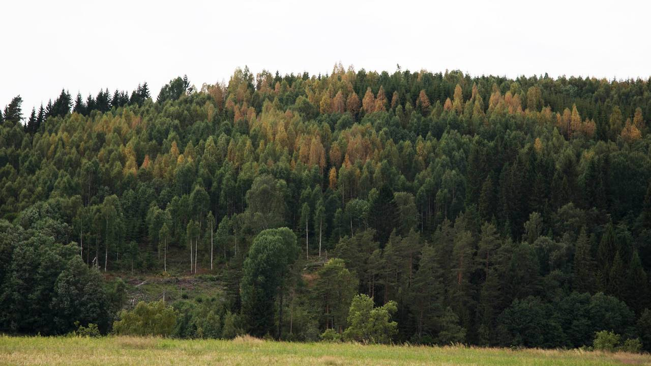 Høstfarger i juni