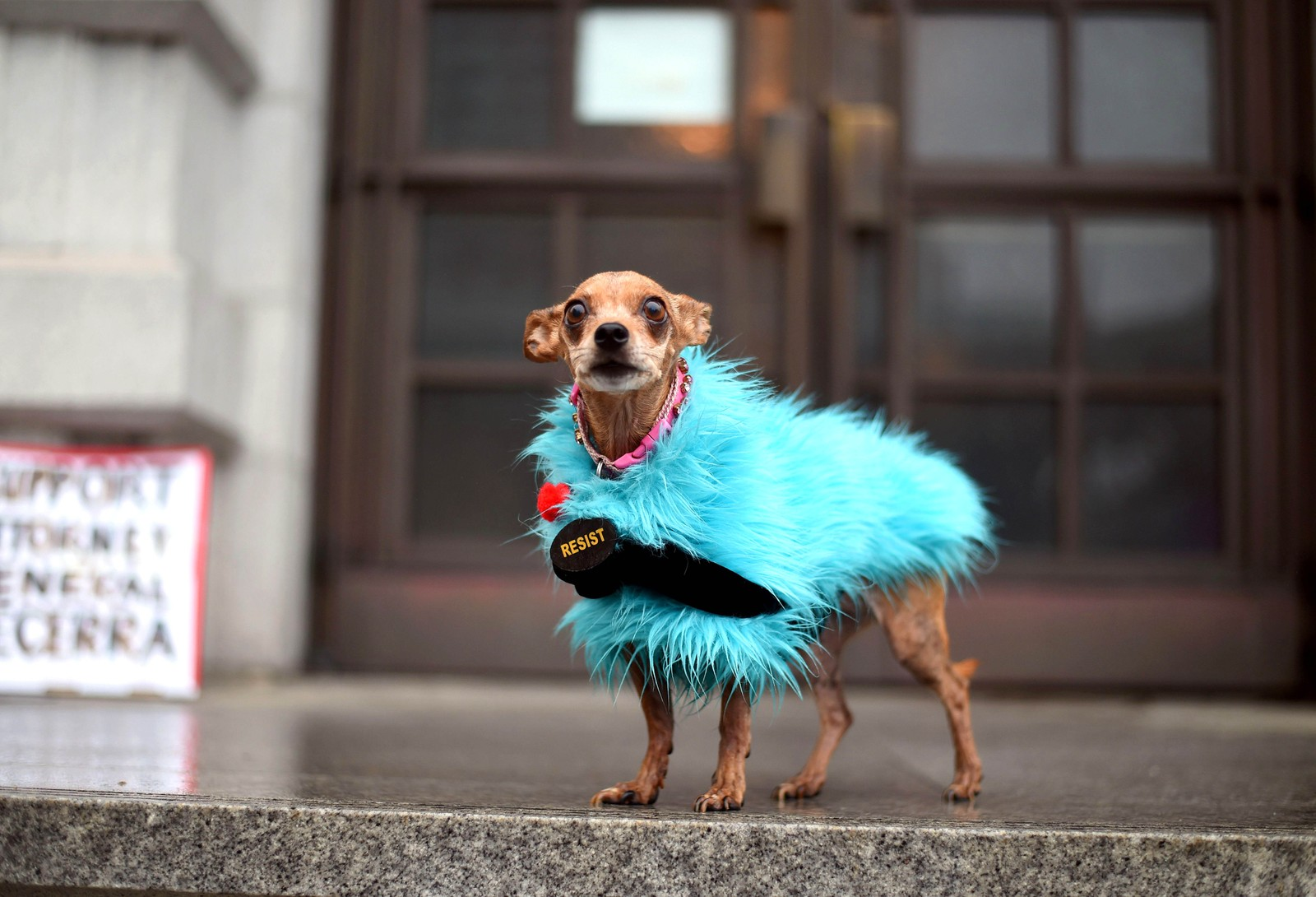 Hunden Doggie står foran en domstol i San Fransisco under en demonstrasjon mot innreiseforbudet.