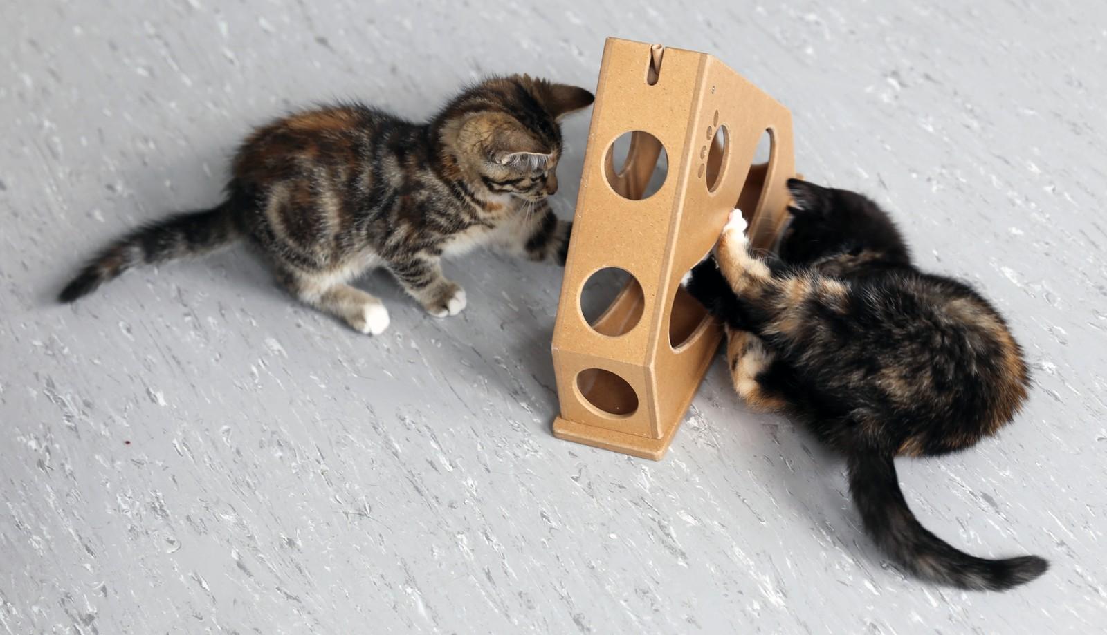 50 KATTUNGER: I løpet av en måned er det kommet inn rundt 50 foreldreløse kattunger til Dyrenes hus på Tertnes.