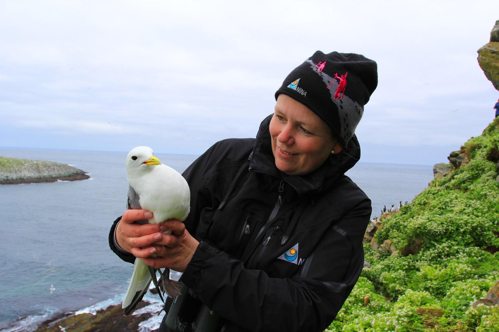 Tone Reiertsen (NINA/Framsenteret/SEAPOP)er fugleforsker og tilbringer hele sommeren på fuglefjellet Hornøya. Krykkjen er en av mange favoritter på øya.