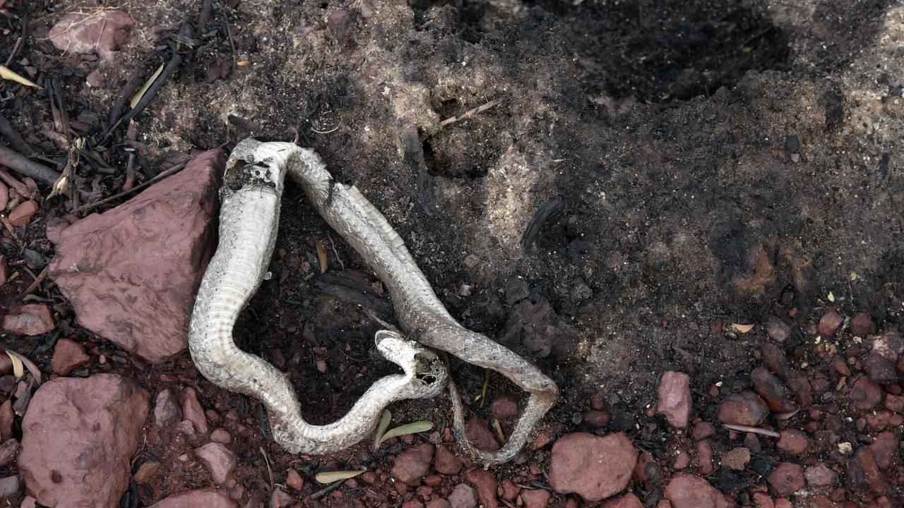 Død slange etter branner i Brasil