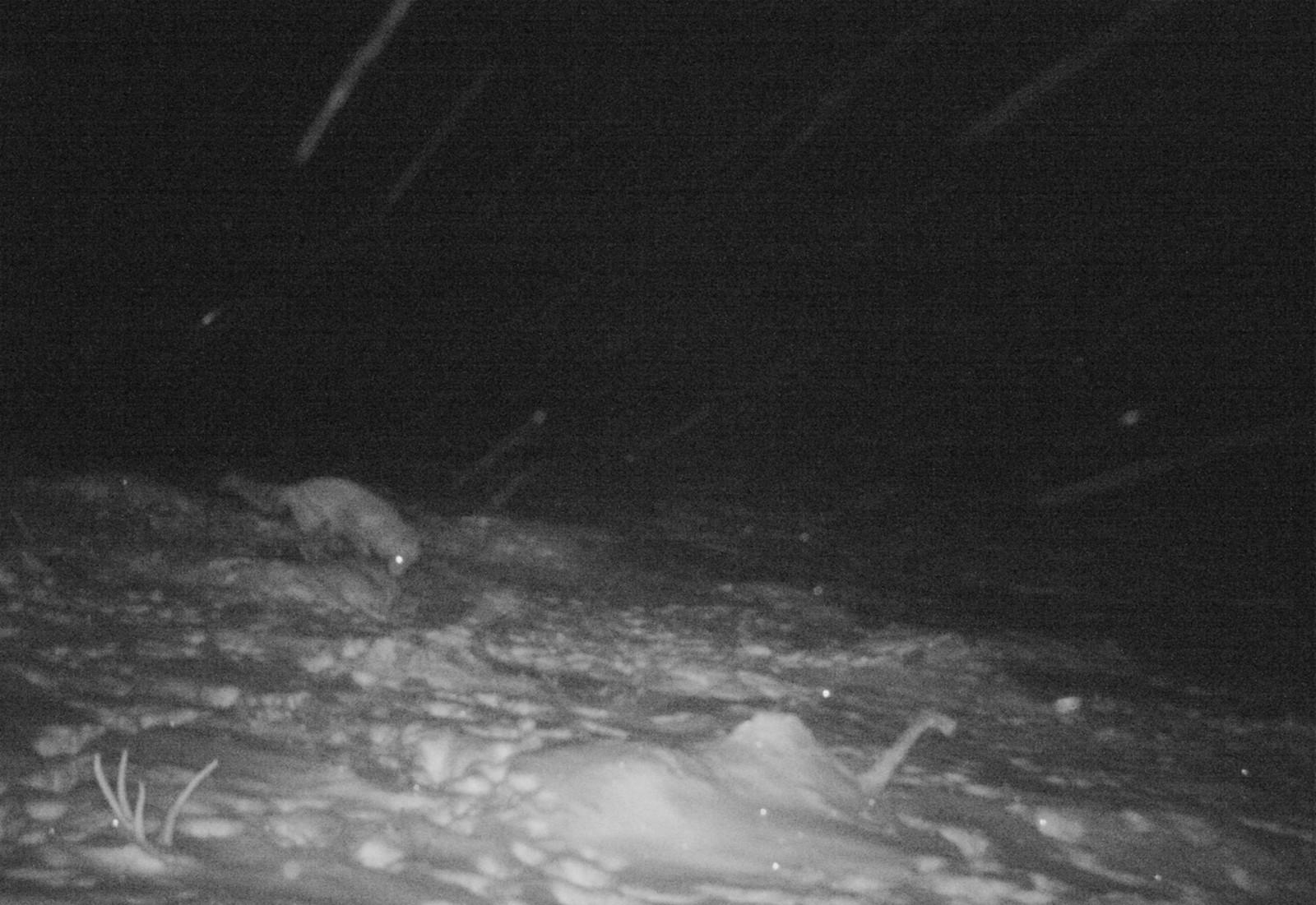 Et av de siste bildene er tatt av en rødrev, 8. november i år.