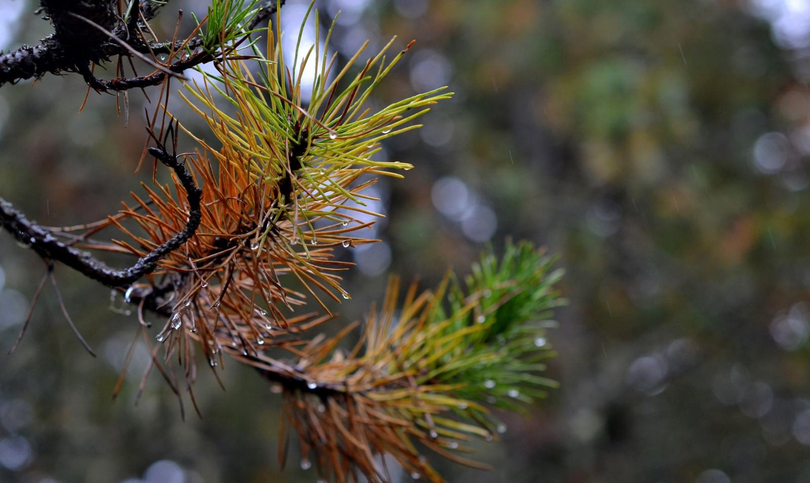 Høst i Bymarka