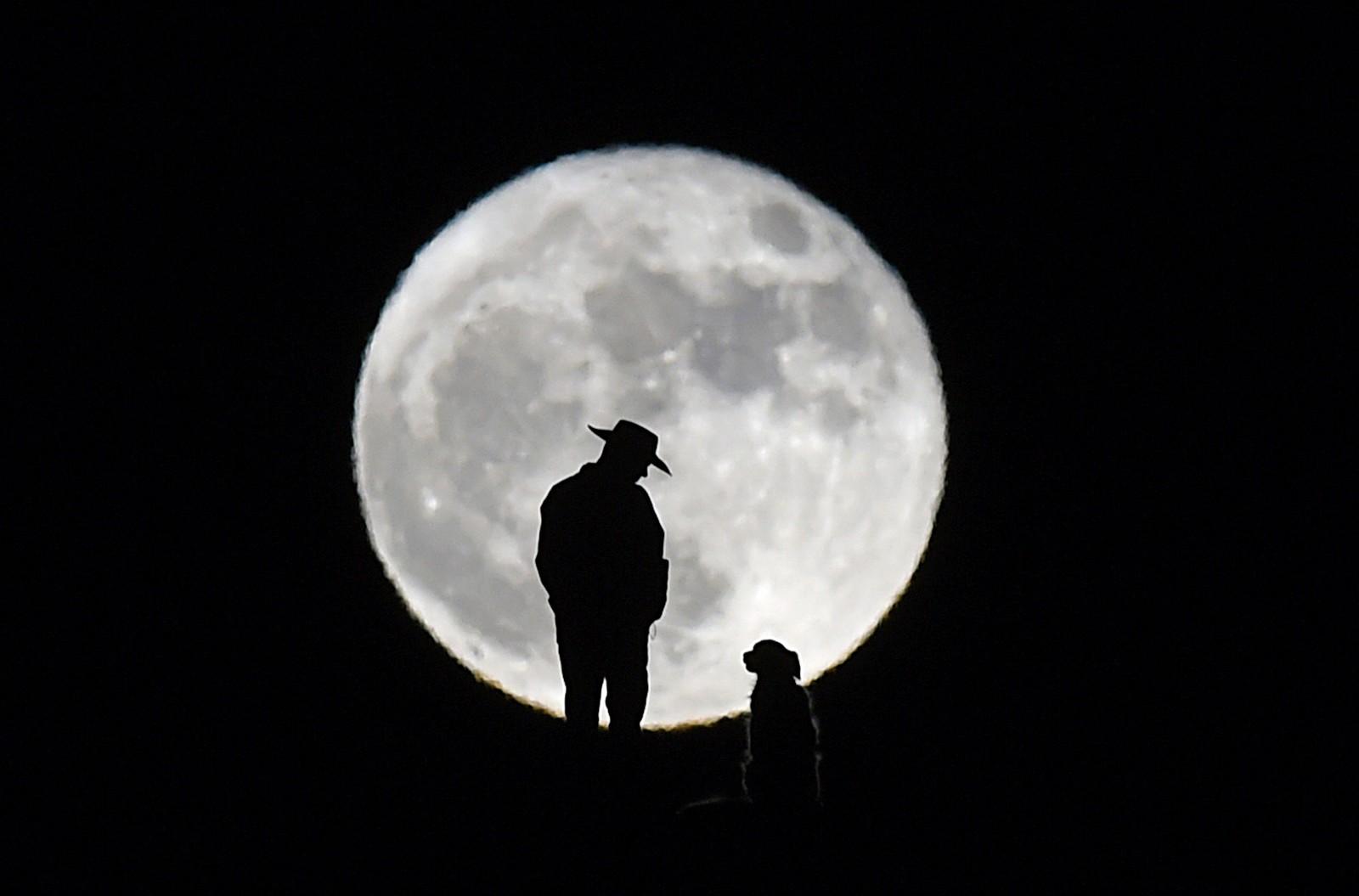 """En mann og hunden hans ser på månen den 14. november. Månen har ikke vært så nære jorden siden 1948. Det var bare 356 509 kilometer til den. Fenoment blir kalt """"supermåne""""."""