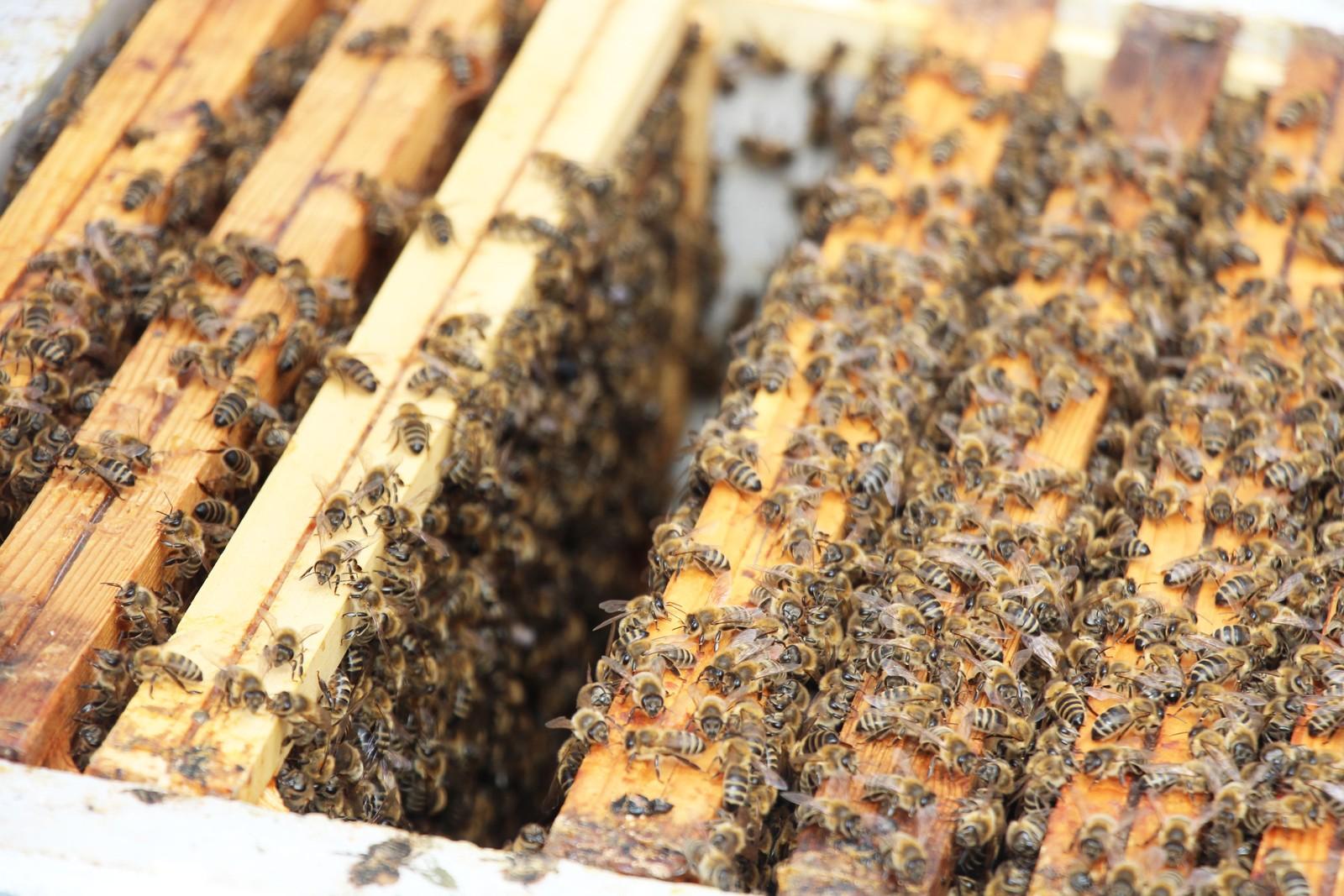 På taket har han to store bikuber som er designet av Snøhetta pluss fire standard norske bi-kasser. Han får 250 kilo honning i året av biene han har på Mathallen-taket. I tillegg har han kasser stående på svigerfamiliens gård.