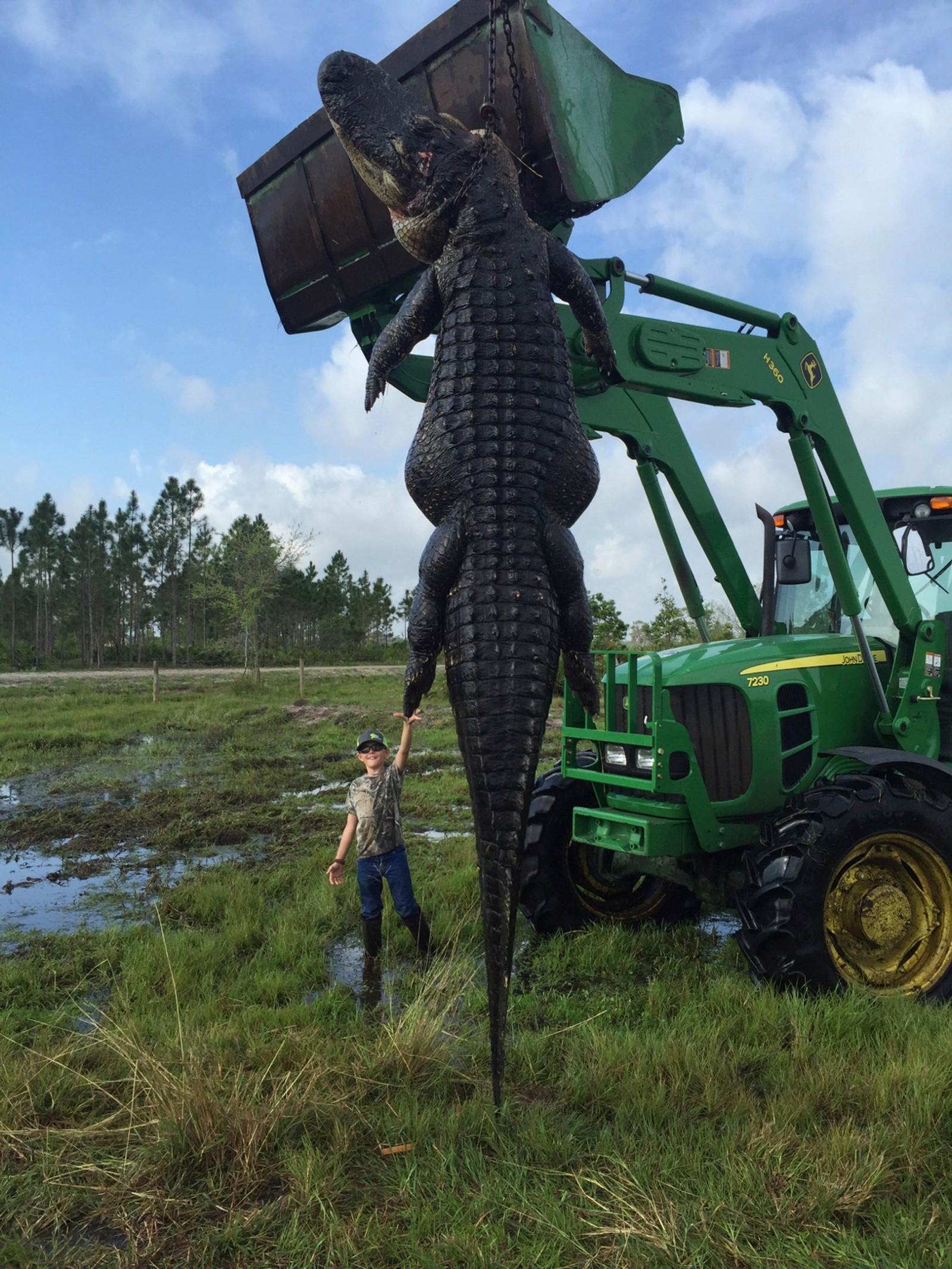 Mason Lightsey (9) prøvde seg på en high-five med en 363 kg tung og 4,5 meter lang alligator, som ble fanget og avlivet på farens gård i Florida. Den skal etter sigende ha spist flere kyr.