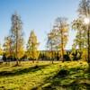 Sola skinner bak høstgule trær ved et vann
