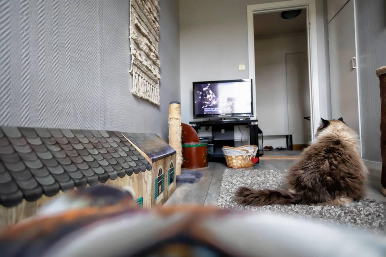Kattene har eget katterom med TV for underholdning