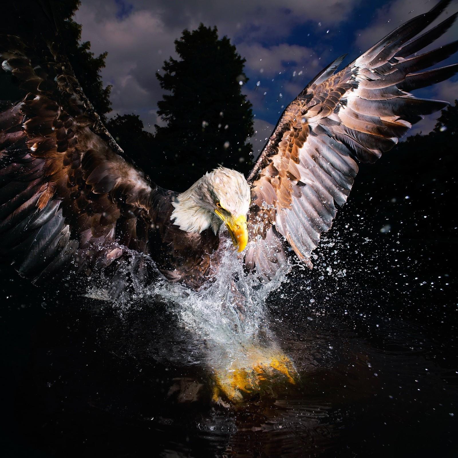 Biletet med tittelen «Bald Eagle» har blitt valgt ut som ein av ti finalistar blant 10.000 andre bidrag i konkurransen.