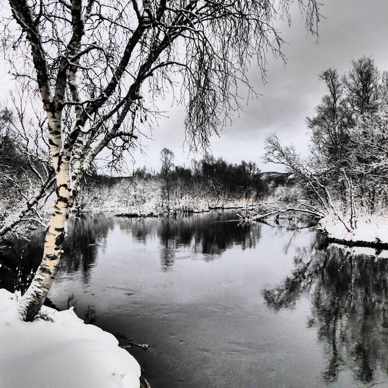 Futelva i vinterfrakk. Teken på Bertnes i Bodø.