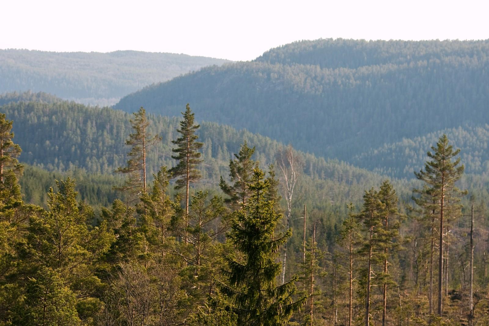 Utsikt fra Gjøkeredet mot sørvest.