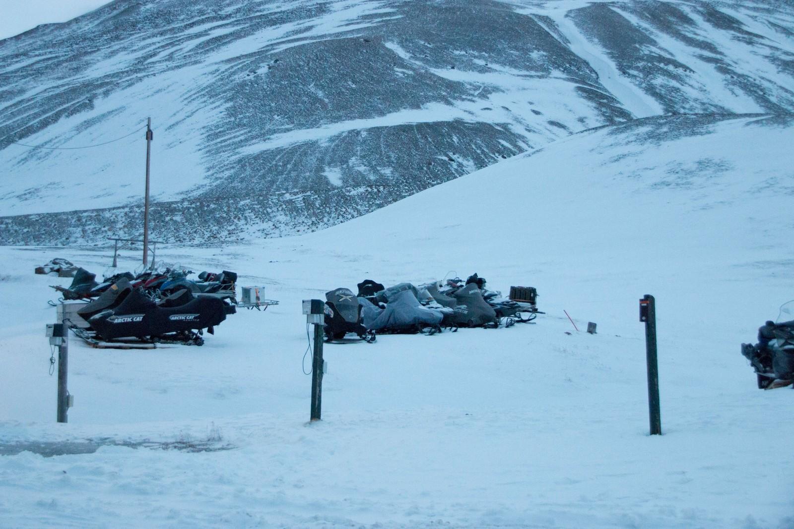 Et velbrukt transportmiddel på Svalbard.