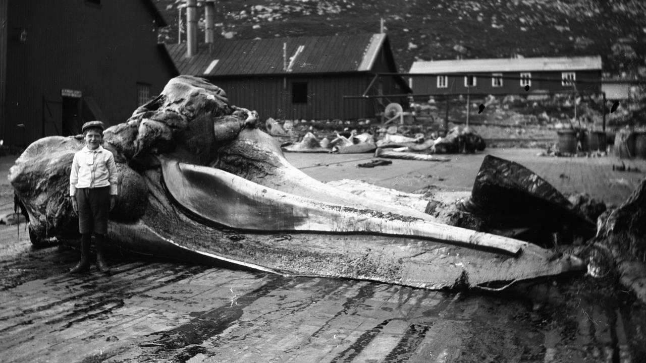 Fra «Den Norske Stats Kvalstasjon» på Vågane på Bremangerlandet i Vestland. Bildet er fra rundt 1920.