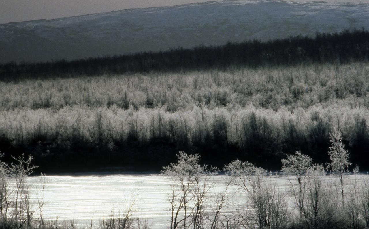 Vår-vinter