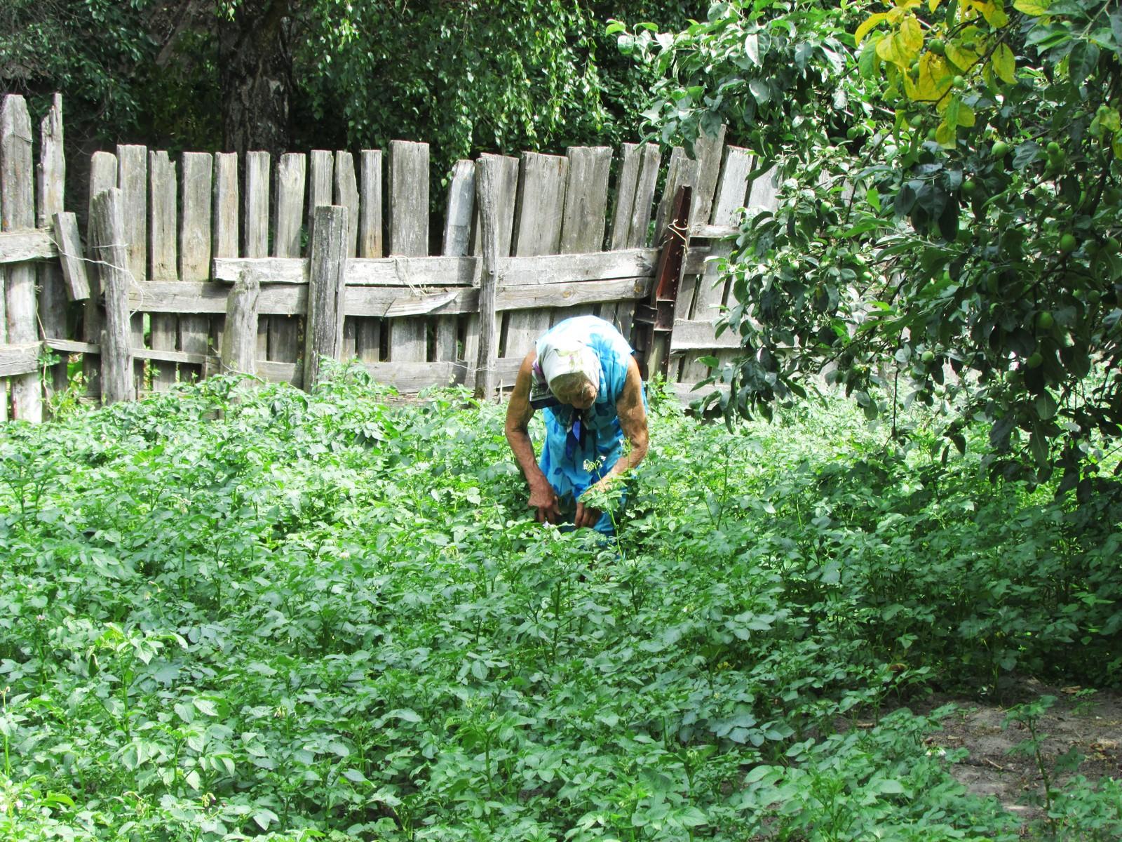 Rosalie brukte ikke sprøytemidler, og tilbrakte derfor mye tid med å luke i åkeren sin. Som tidligere sommere, var hun også sin siste sommer aktiv med å holde ugress og insekter borte fra plantene.