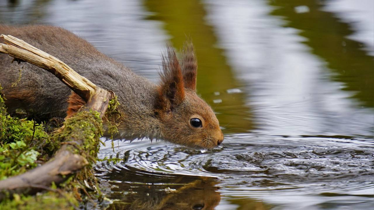Hans Eivind Riise, ekorn møter frosk