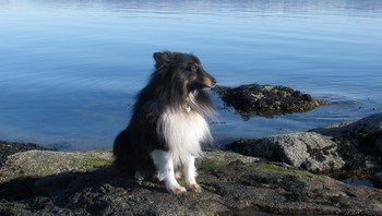 På Hoøya med Theo