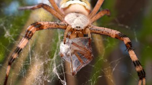 I edderkoppenes hus