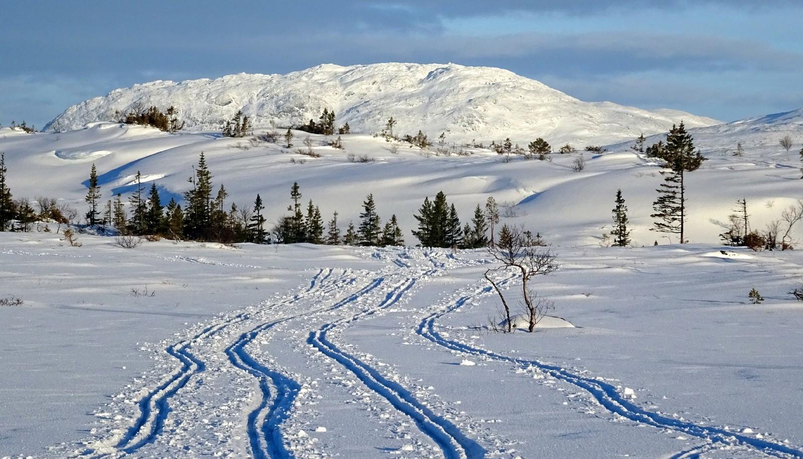 Verdalsfjella- mot Hermannsnasa