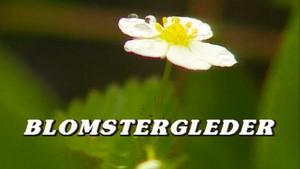 Blomstergleder