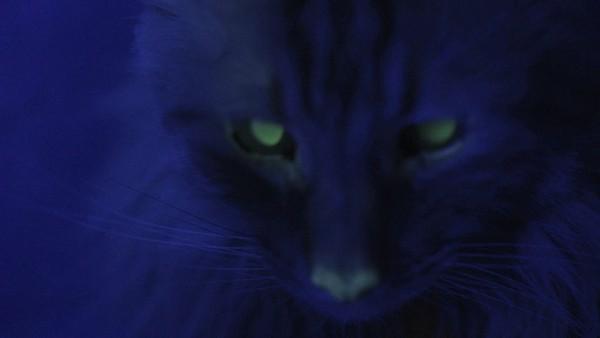 Kan en selvlysende katt forhindre sultkatastrofer?