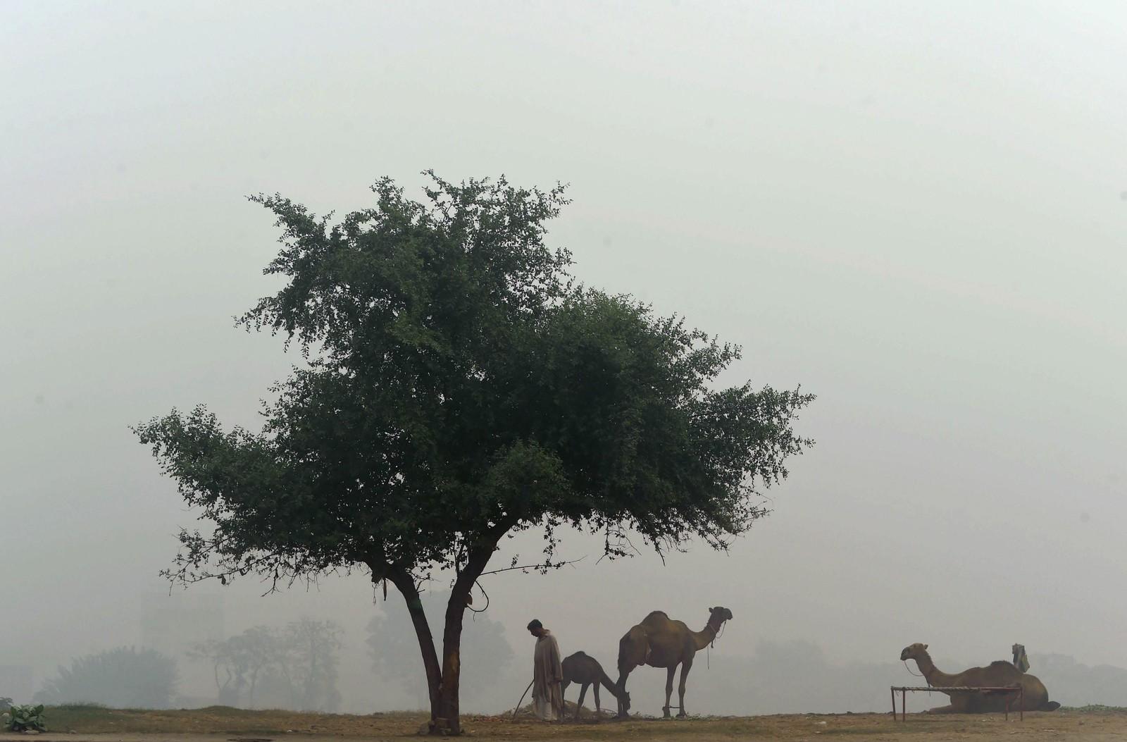 Vakkert, men luften er forurenset. Lahore i Pakistan opplevde flere dager med smog denne uken.