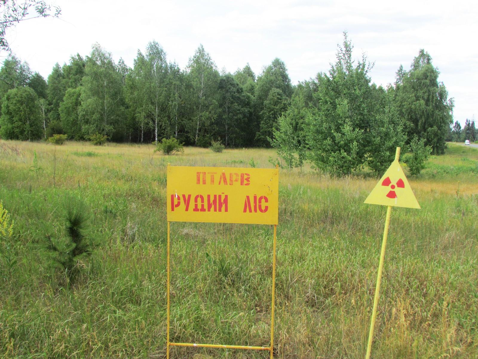 «Rød skog» står det på skiltet. Skogen mellom Reaktor nummer fire og Pripyat fikk mye radioaktivt nedfall og er fortsatt blant de mest radioaktive stedene i Tsjernobyl-området.