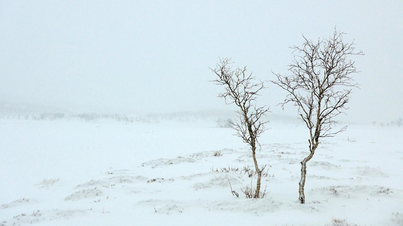 Minilldalsmyrene i tett snødrev