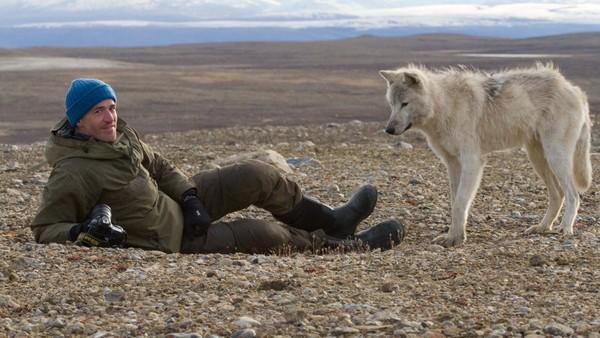 Vil Gordon bli godtatt av ulvefamilien?