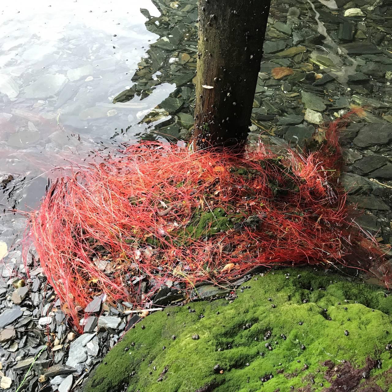 Miljøkriminalitet i Berlevåg kommune