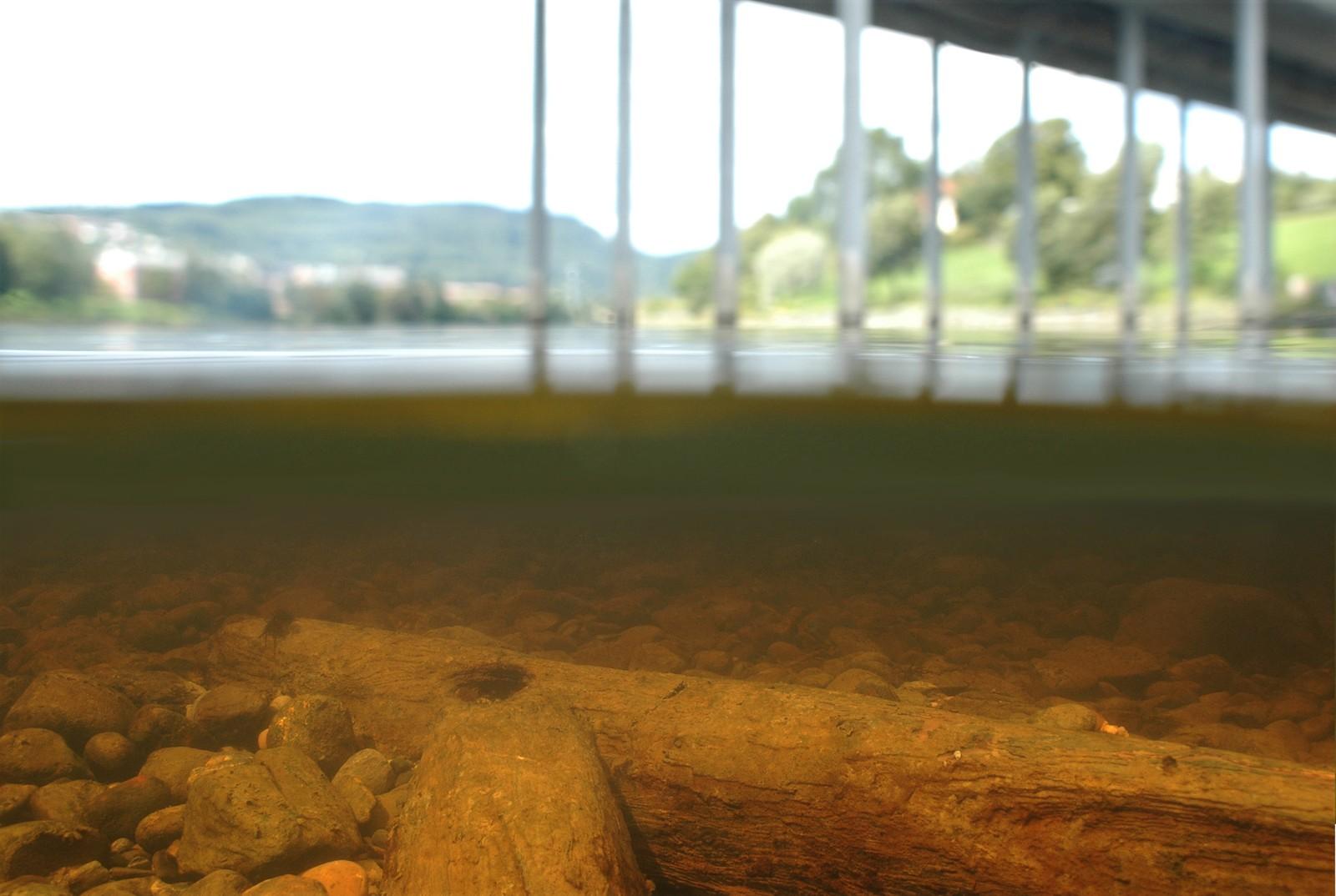 Når en står på nåtidens Elgeseter bru, kan en se tydelige spor etter en tidligere bro i elva under. I 2009 fikk NTNU Vitenskapsmuseet datert tømmeret, som viste seg å være fra 1260-tallet. Middelalderens Elgeseter bru lå omtrent der den ligger i dag, fra 1100-tallet og fram til 1680-årene. Trebrua var trolig nærmere 150 meter lang, noe som gjorde den til Norges desidert lengste bru i middelalderen. Begge de to lengste norske bruene i middelalderen fantes faktisk i Trøndelag. Den nest lengste gikk ut til Steinvikholmen.