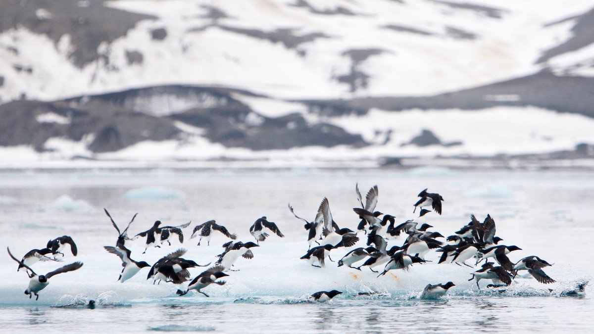 Havene verden over mister oksygen