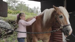 Lær å børste en hest