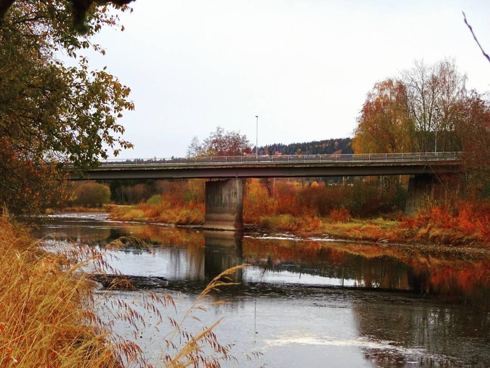 Sterke høstfarger ved elva Ogna i Steinkjer. Bildet er delt av @arnulfass på instagram med emneknaggen #nrktrøndelag.