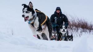 Monsen og hundene - sesong 3