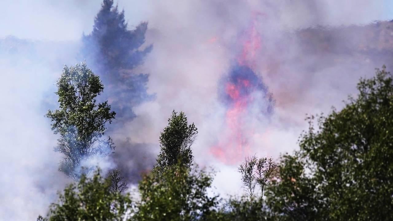 Bilde av gressbrann i Øygarden, trær i forgrunnen, røyk og flammer i bakgrunnen.