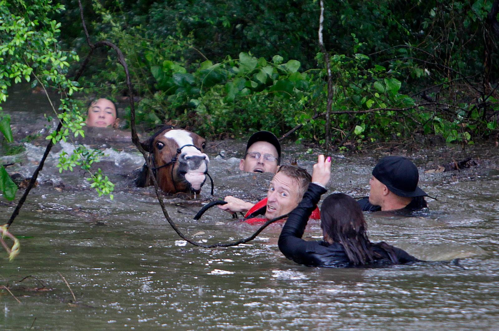 Justin Nelzen (i rød vest) var en av de som kjempet en dramatisk kamp for å redde rundt 70 hester fra de enorme vannmengdene som rammet Houston-området i USA denne uka. Flere tusen er uten strøm, og veier og skoler er stengt etter intens nedbør.
