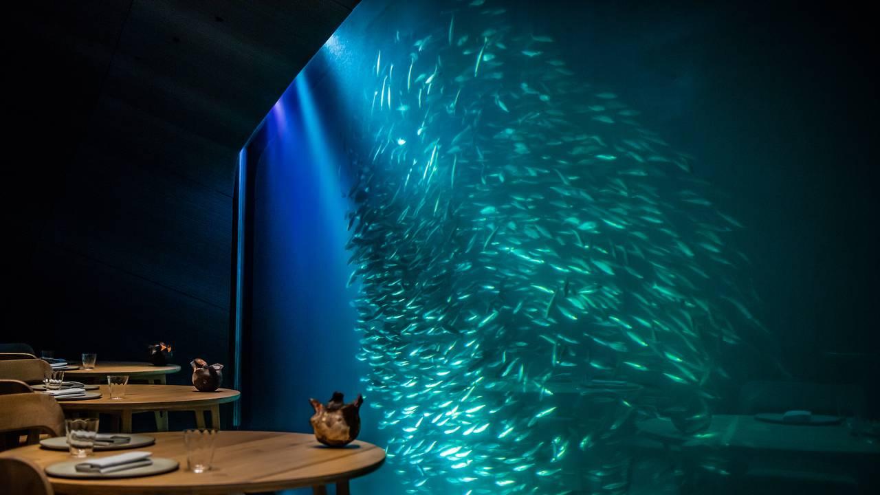 En stim av sei svømmer forbi vinduet på undervannsrestauranten Under
