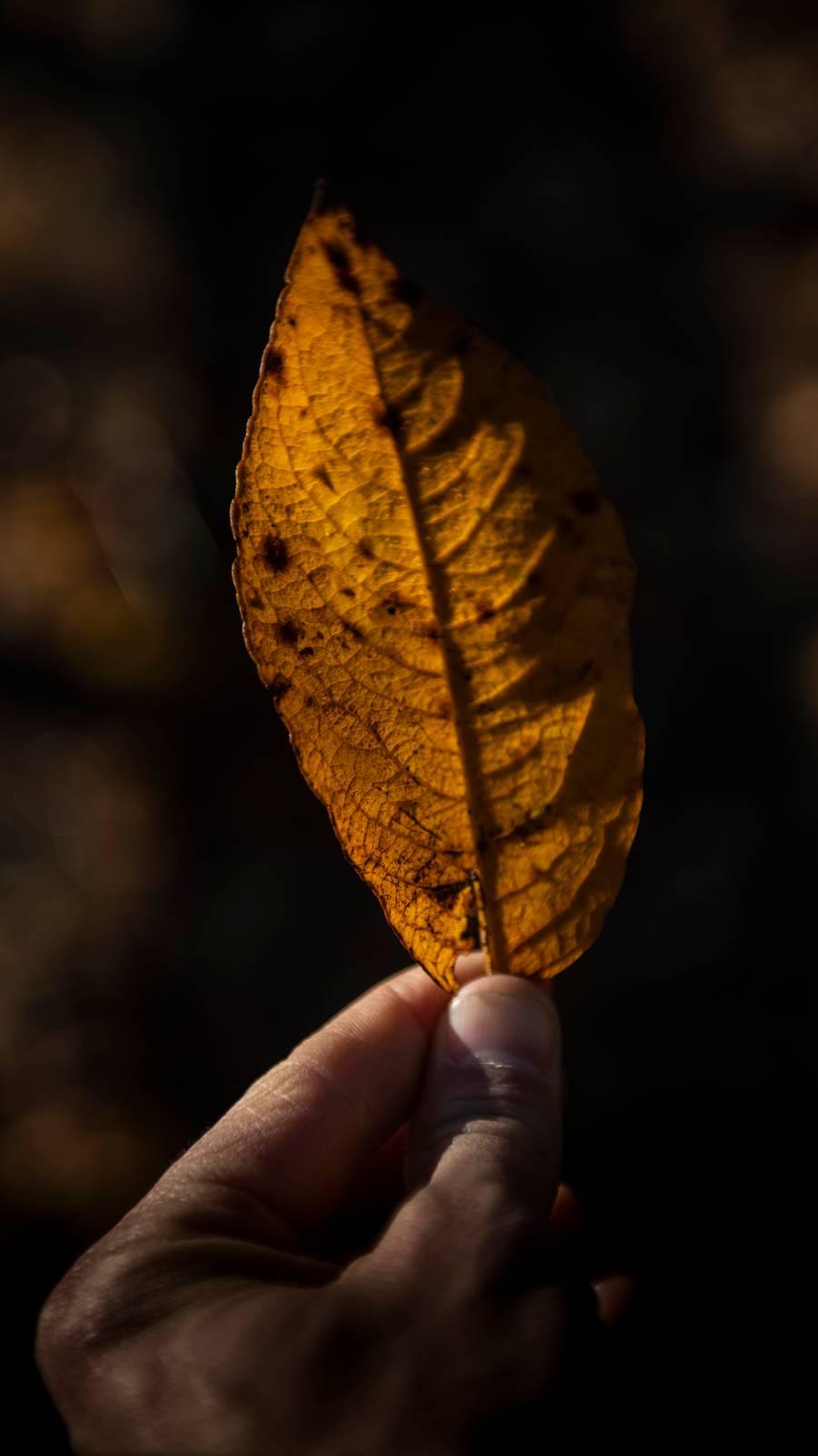 Høstblad i hånda