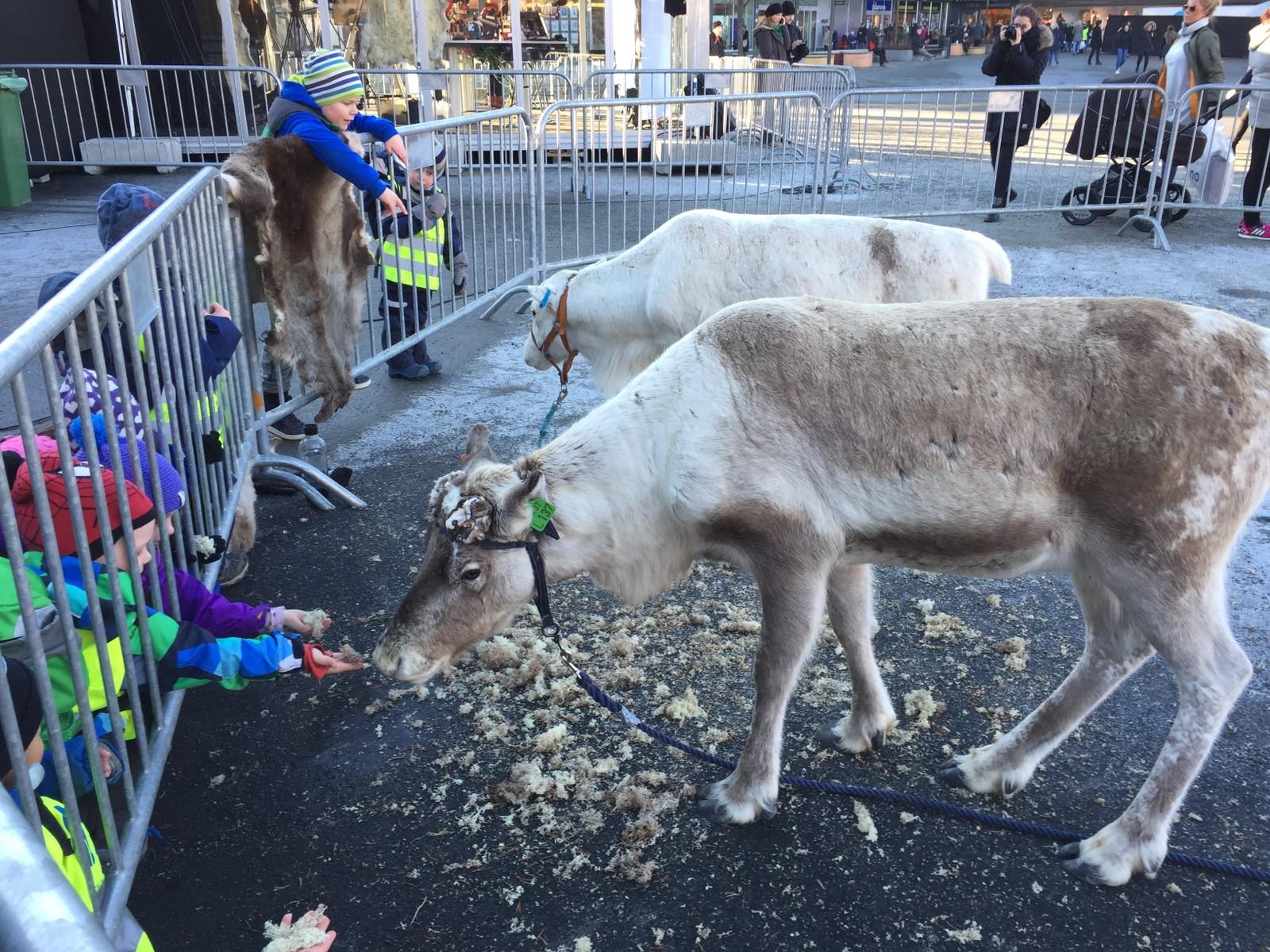 Barna mater rein på torget