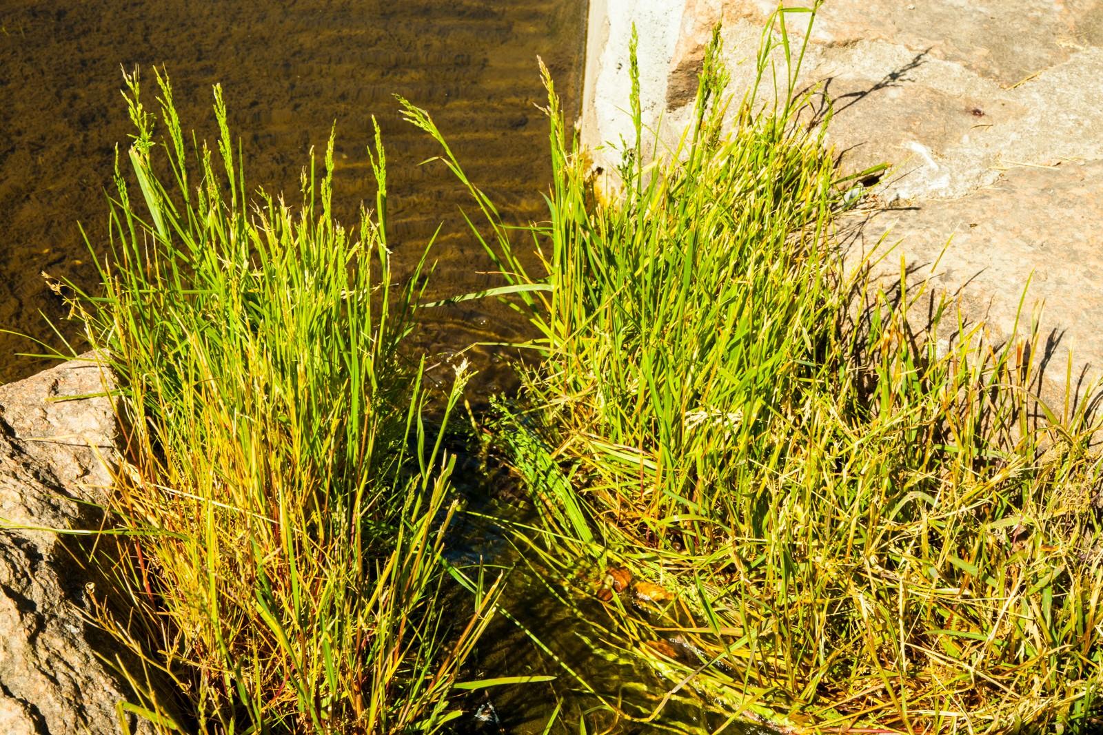 Bekken, som Nygårdshaug har fått lagt i rør og ledet vannet, bukter seg gjennom gress og busker gjennom hagen.