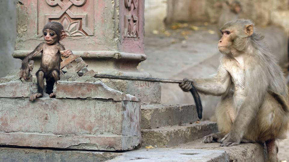 Spioner blant dyra